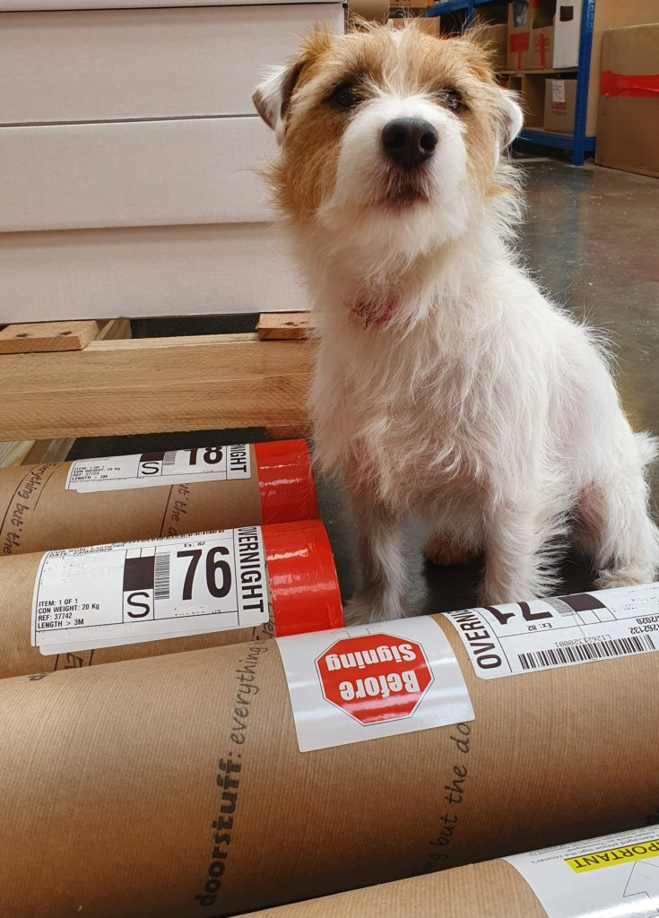 Our deputy head of security (Tintin the Parsons Russel Terrier) looking over some of our dispatches